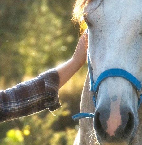 pupilaje-caballos
